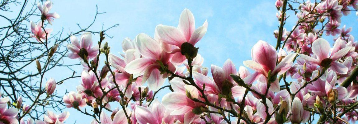 Freies Sonntags-Qigong für alle!